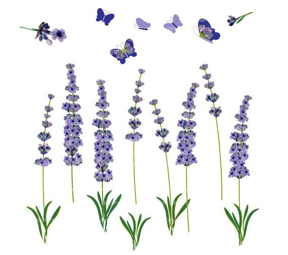 Lavendar clipart banner library stock Free Lavender Cliparts, Download Free Clip Art, Free Clip Art on ... banner library stock