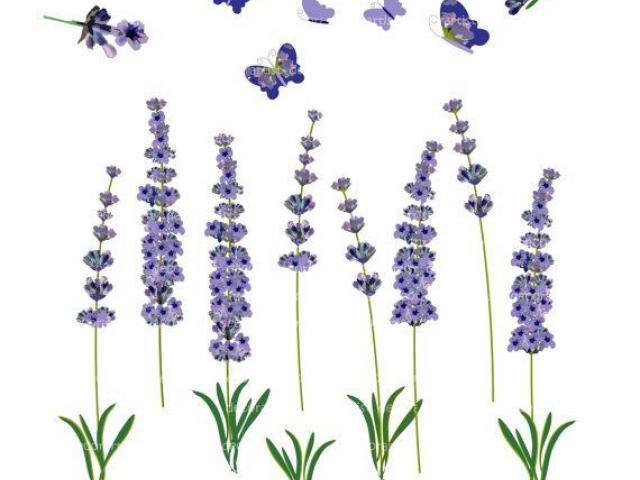 Basic lavender clipart svg royalty free Free Lavender Clipart, Download Free Clip Art on Owips.com svg royalty free