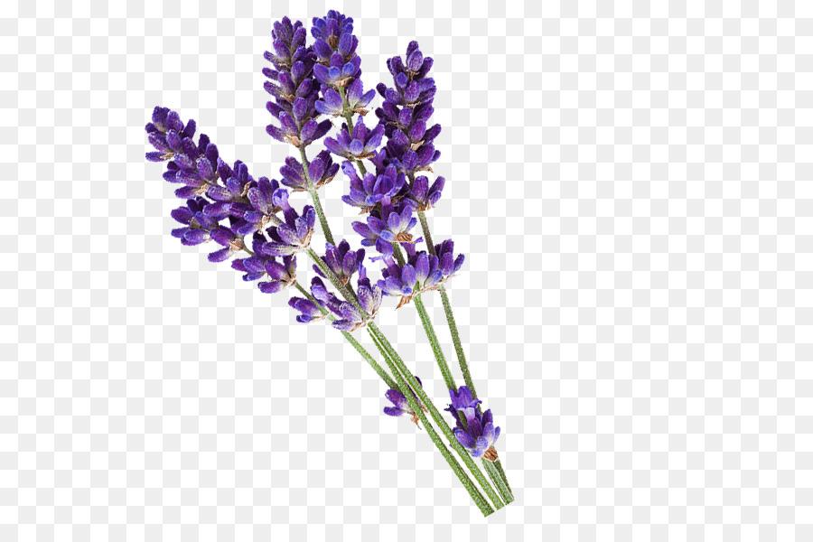 Basic lavender clipart freeuse Flowers Clipart Background clipart - Flower, Lavender, Purple ... freeuse