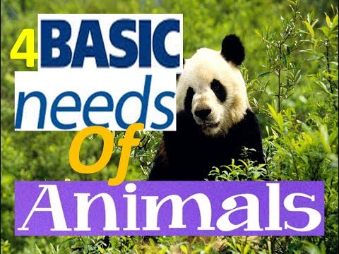 Basic needs of man clipart clipart freeuse 4 Basic Needs of Living Things -Animation Video for Kids clipart freeuse