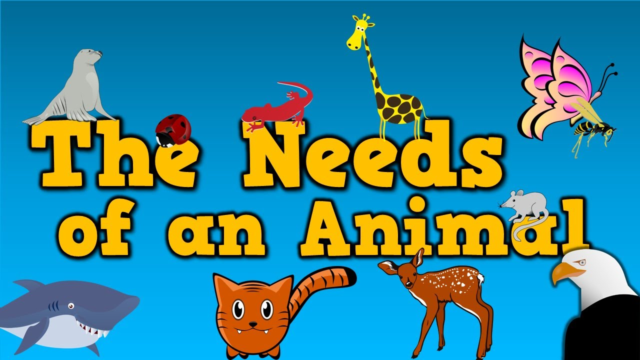 Basic needs of man clipart graphic free library The Needs of an Animal (song for kids about 4 things animals need to  survive) graphic free library