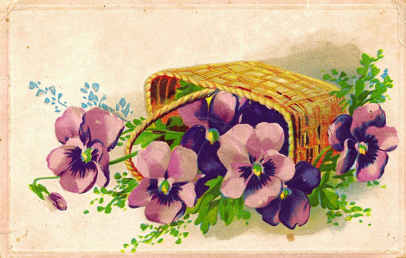 Basket full of pansies clipart clipart transparent download Antique Images: Free Digital Pansy Flower Clip Art Botanical Purple ... clipart transparent download