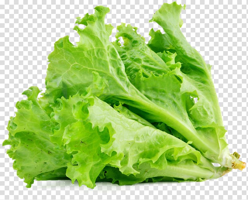 Basket of lettuce clipart transparent graphic download Selective focus of lettuce, Lettuce sandwich Butterhead lettuce ... graphic download