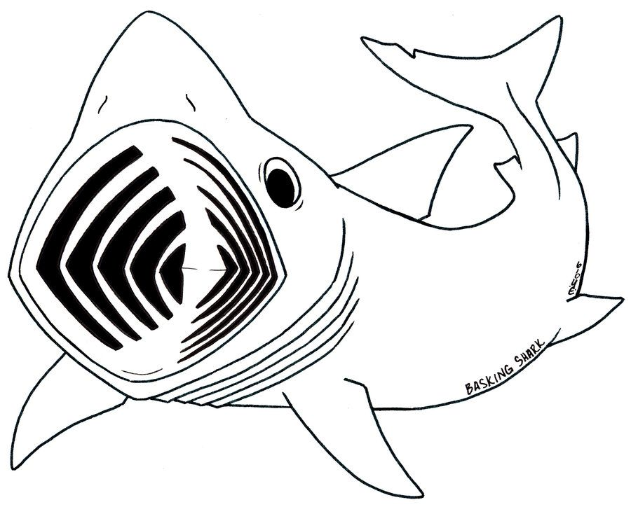 Basking shark clipart image download The Basking or Brudge Shark- 2nd largest (known) fish in the world ... image download