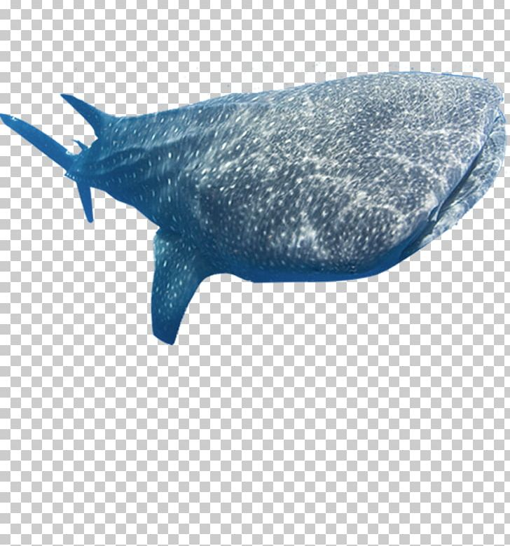 Basking shark clipart banner black and white Whale Shark Marine Mammal Fish PNG, Clipart, Animals, Basking Shark ... banner black and white