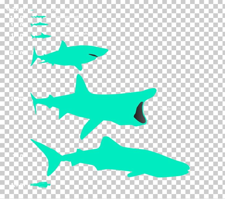 Basking shark clipart picture transparent library Requiem Sharks Great White Shark Basking Shark Whale Shark PNG ... picture transparent library