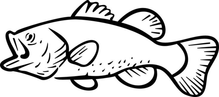 Bass fish outline clipart picture library library Outline of Bass Fish Bass Fish Coloring Pag | Bearded fish | Fish ... picture library library