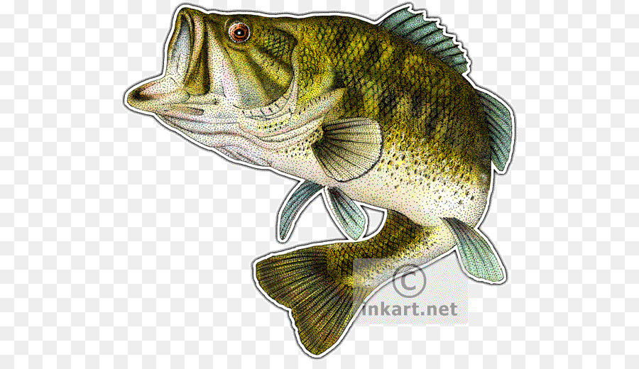 Bass fishing clipart picture free library Fishing Cartoon clipart - Drawing, Fishing, Art, transparent clip art picture free library