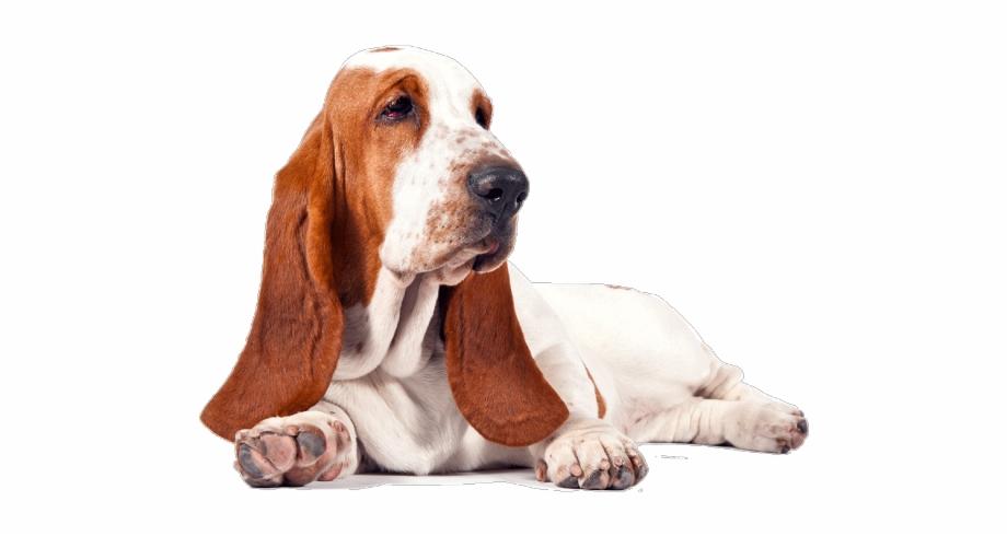 Basset hound clipart free download svg Hollywood Undead Clipart Transparent - Basset Hound Png, Transparent ... svg
