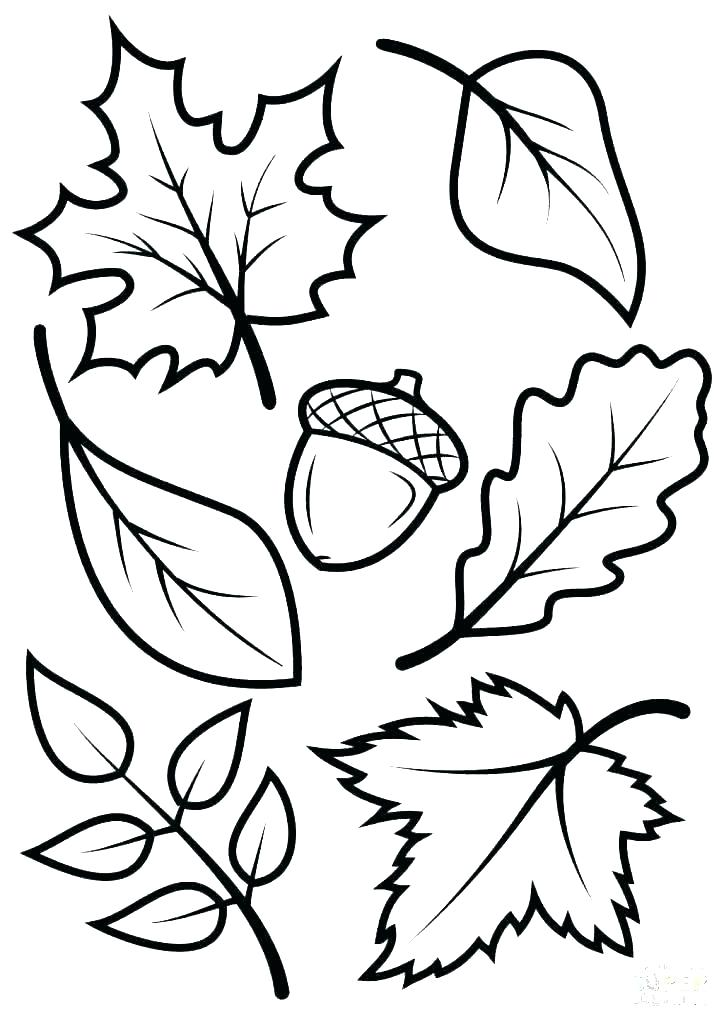 Basswood leaf clipart abstract coloring royalty free Autumn Squirrel Coloring Page Leaves Pages – hikitchen.info royalty free