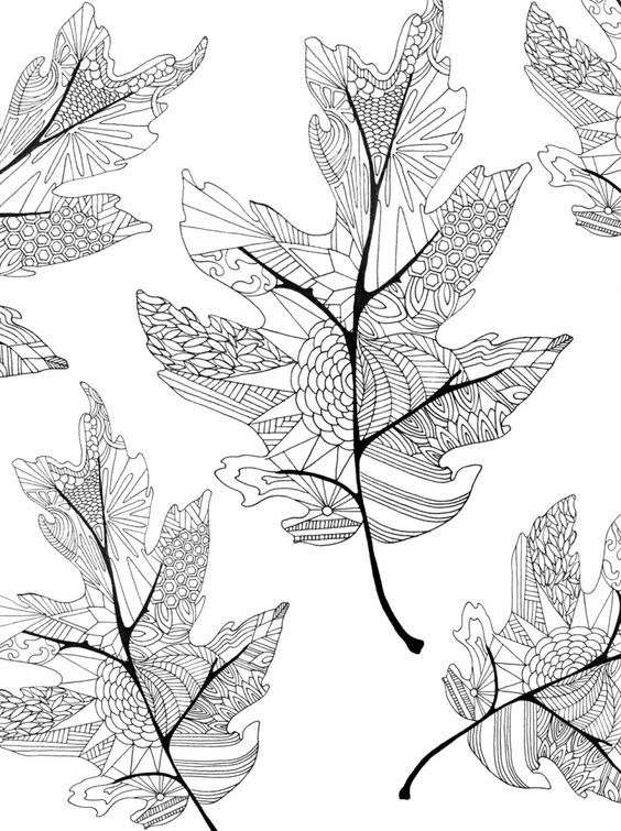 Basswood leaf clipart abstract coloring clip art free Coloring in the lines | Adult Coloring | Leaf coloring page, Fall ... clip art free