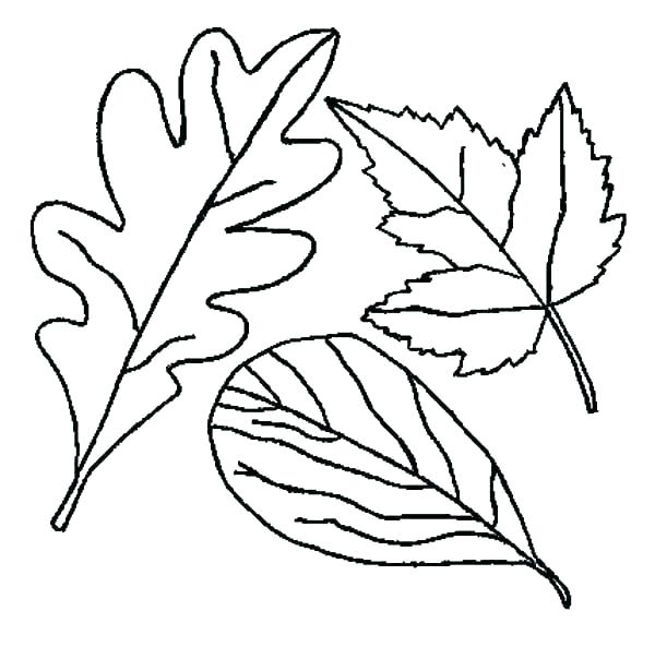 Basswood leaf clipart abstract coloring banner download leaves coloring page – indiansnacks.co banner download