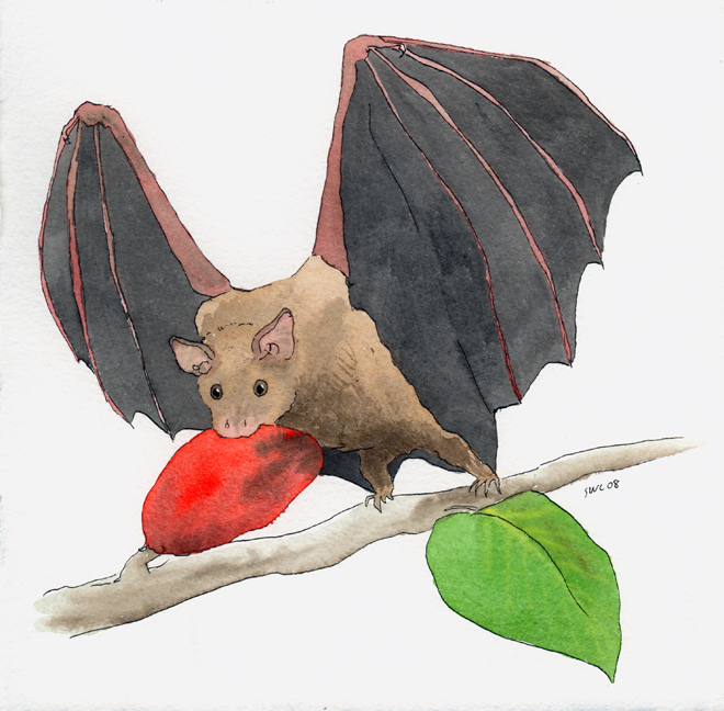 Bat eating bat clipart png black and white library Free Drawings Of Fruit Bats, Download Free Clip Art, Free Clip Art ... png black and white library
