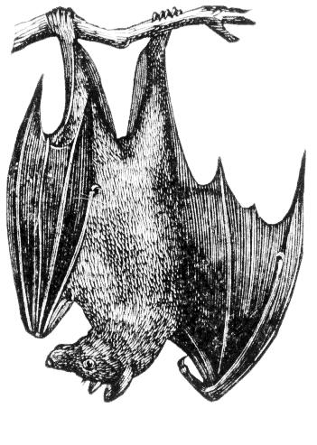 Bat realistic clipart clipart download Bat clipart realistic, Bat realistic Transparent FREE for download ... clipart download