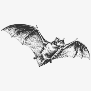Bat realistic clipart picture black and white download Bats PNG Images | PNG Cliparts Free Download on SeekPNG , Page 11 picture black and white download