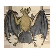 Bat realistic clipart jpg royalty free stock All kinds of Animal Clipart jpg royalty free stock