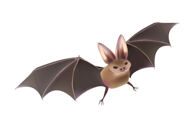 Bat vector clipart graphic library stock Bats Vectors, Photos and PSD files   Free Download graphic library stock