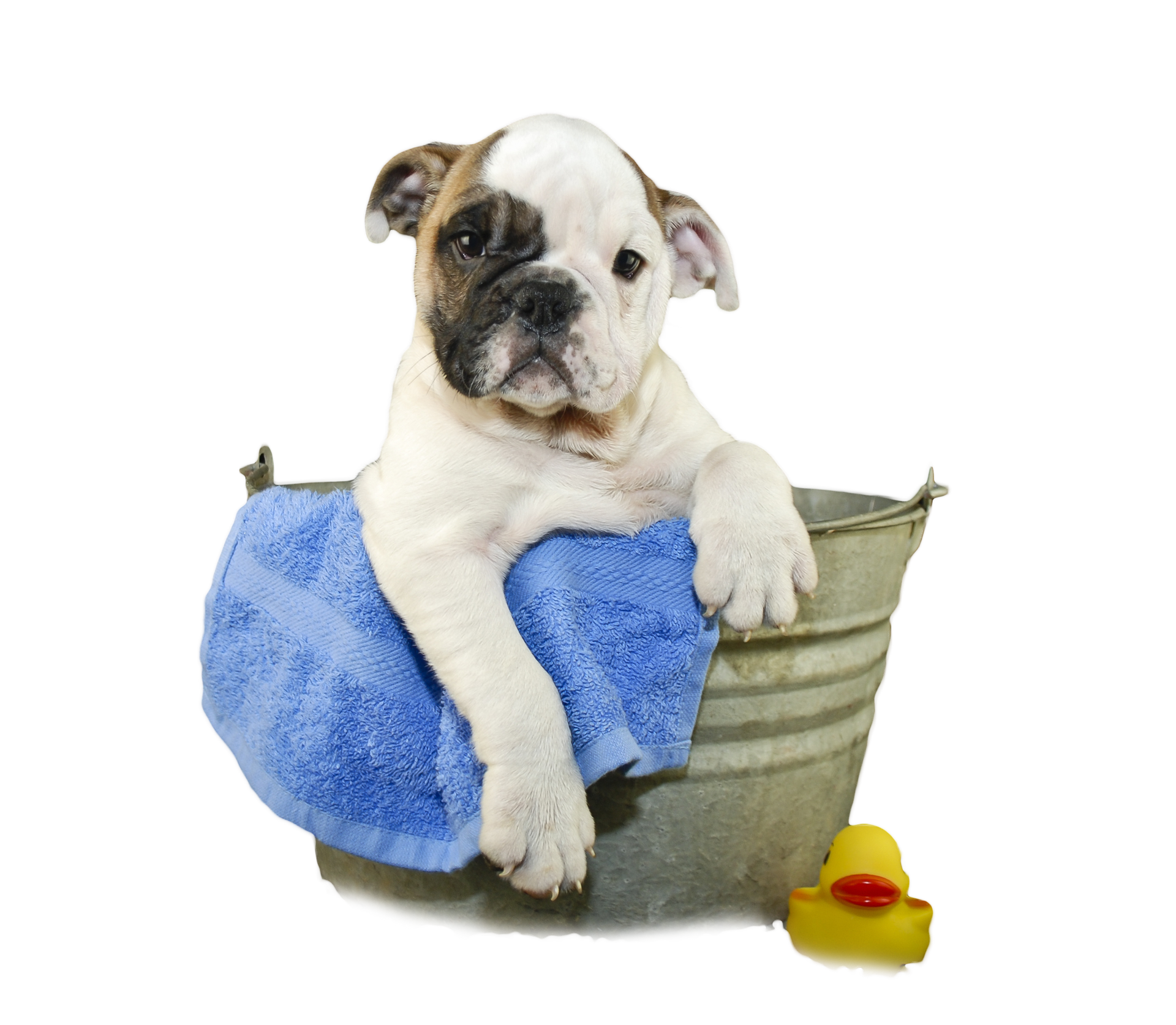 Dog bathing clipart jpg black and white Dog Bath PNG Transparent Dog Bath.PNG Images. | PlusPNG jpg black and white