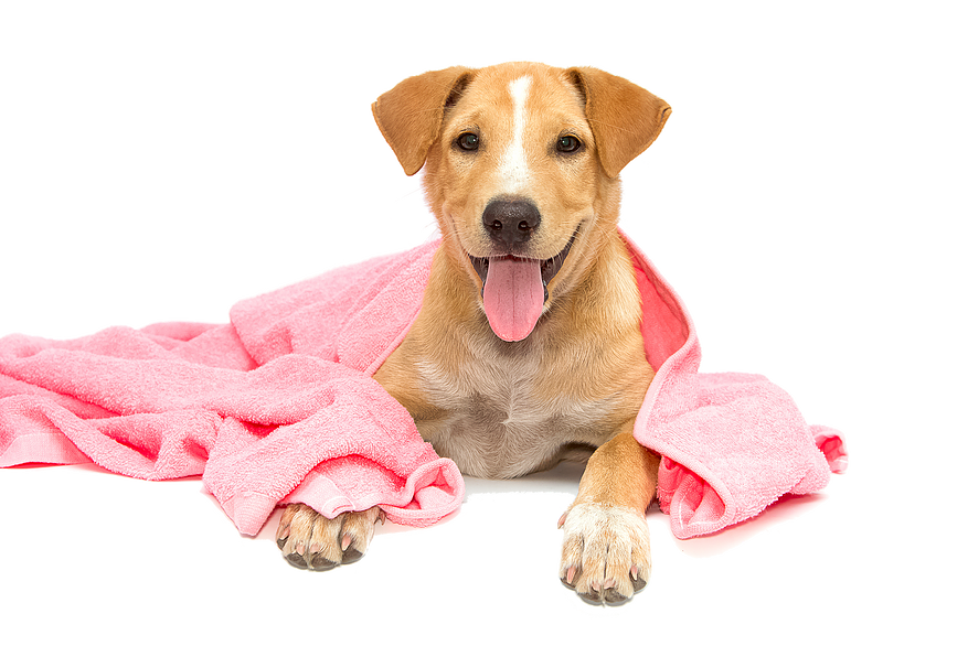 Washing dog clipart jpg free stock Dog Bath PNG Transparent Dog Bath.PNG Images. | PlusPNG jpg free stock