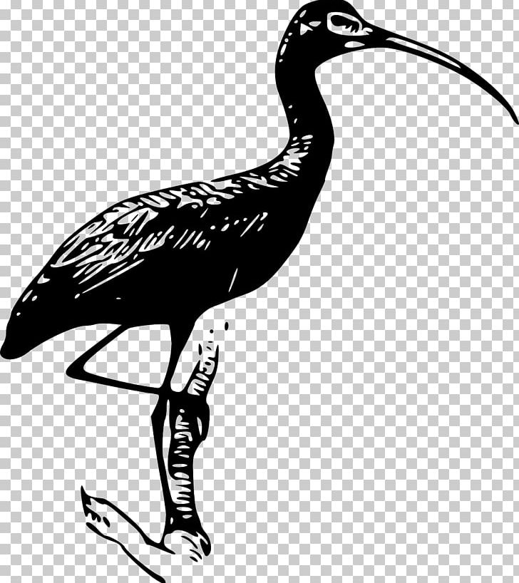 Bayou heron bird transparent clipart clip freeuse download Ibis PNG, Clipart, American White Ibis, Artwork, Beak, Bird, Black ... clip freeuse download