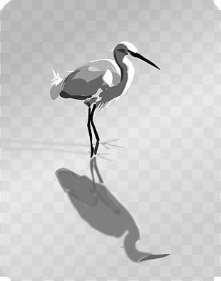Bayou heron bird transparent clipart clip art black and white stock Bird Heron PNG, Clipart, Animals, Beak, Bird, Ciconiiformes, Crane ... clip art black and white stock