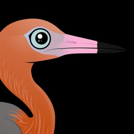 Bayou heron bird transparent clipart svg stock Read About the Reddish Egret < Meet the Birdorable svg stock