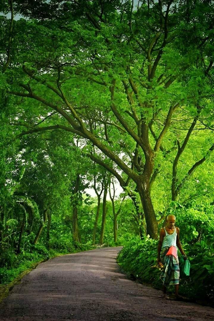 Bd editz background clipart vector free stock Beautiful Bangladesh: A village road through the trees   Bengali ... vector free stock