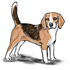 Bealge clipart clip transparent download Free Beagle Cliparts, Download Free Clip Art, Free Clip Art on ... clip transparent download