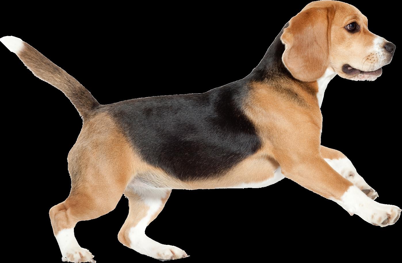 Beagle dog clipart freeuse library beagle dog - Sticker by Taliafera freeuse library