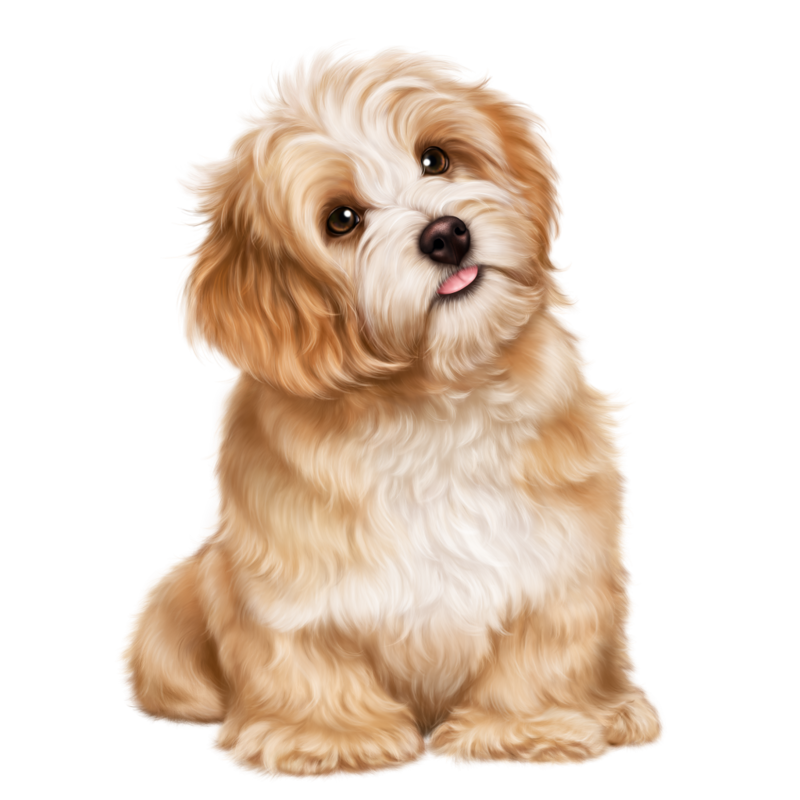 Havanese dog clipart black and white library christmas_girl_and_a_puppy 52.png | Dog 3D Tubes 1 | Pinterest ... black and white library