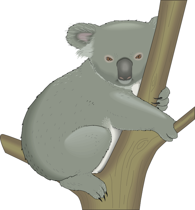 Bear tree clipart jpg library library Koala Clipart - Graphics of Koalas jpg library library