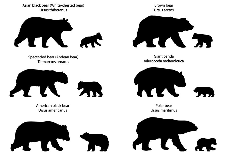 Bear with cub clipart silhouette vector royalty free download Silhouettes of bears and bear-cubs vector royalty free download