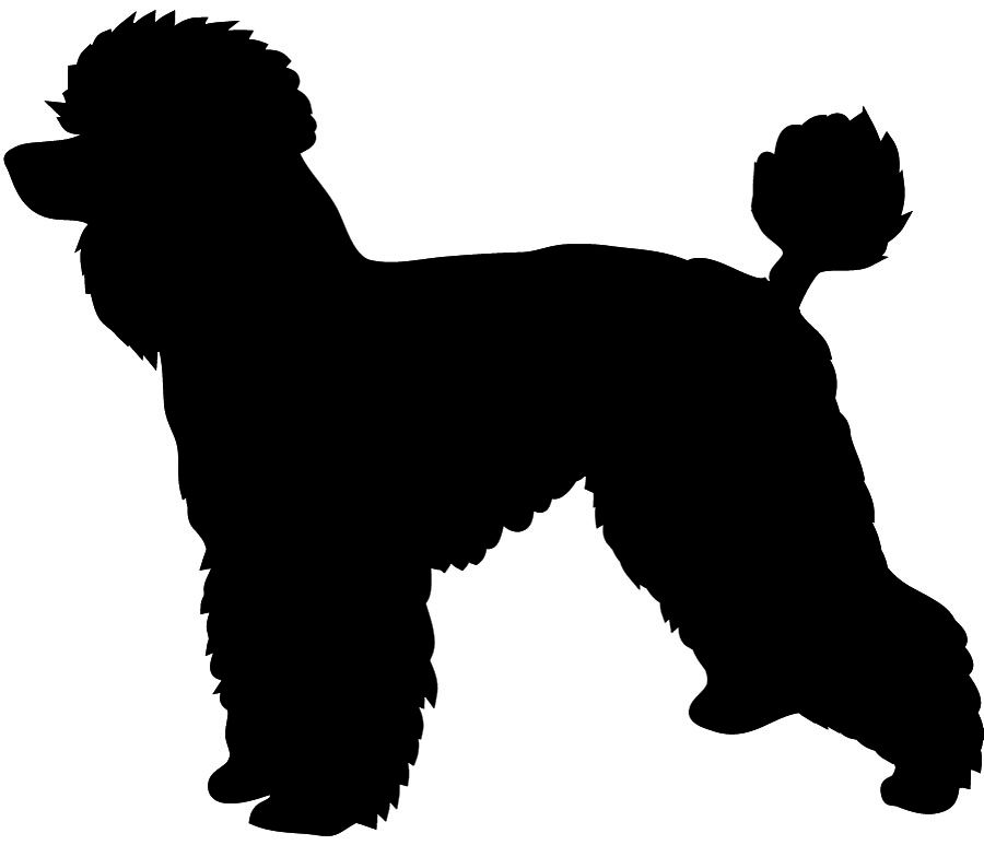 Bear with leash free clipart image freeuse library Poodle With Leash Silhouette Clipart - Clipart Kid | Dog Grooming ... image freeuse library