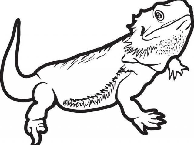Bearded dragon clipart black and white jpg download Bearded Dragon Drawing | Free download best Bearded Dragon Drawing ... jpg download