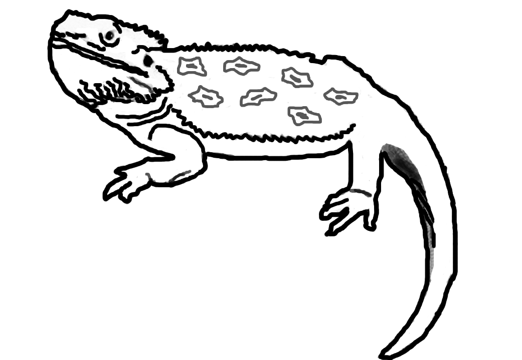 Bearded dragon clipart black and white graphic free library Free Cartoon Bearded Dragon, Download Free Clip Art, Free Clip Art ... graphic free library