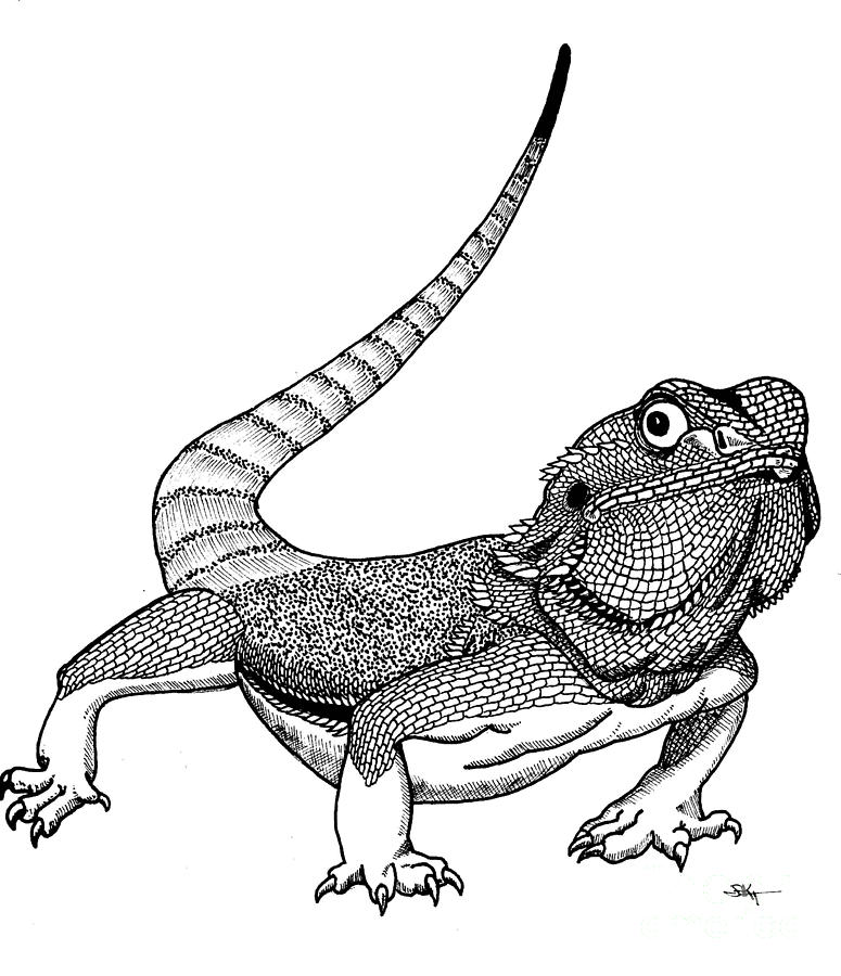 Bearded dragon clipart black and white clipart library library Bearded dragon Colouring Pages - Clip Art Library clipart library library
