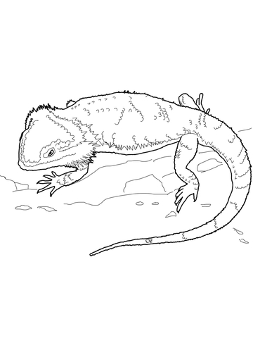 Bearded dragon clipart black and white svg royalty free library Bearded Dragon coloring page | Free Printable Coloring Pages svg royalty free library
