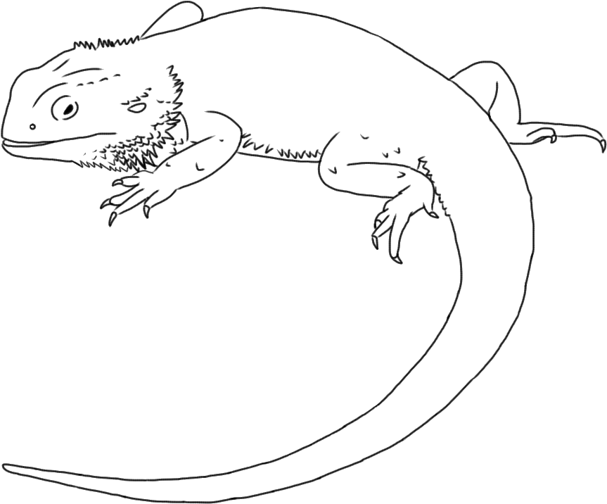 Bearded dragon clipart black and white picture transparent Bearded Dragon Clipart Black And White - Line Art , Transparent ... picture transparent