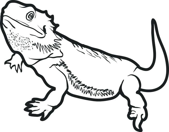 Bearded dragon clipart black and white image royalty free download bearded dragon coloring page pages printable d | Bearded dragon ... image royalty free download