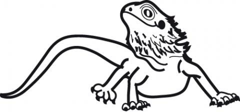 Bearded dragon silhouette clipart image library Bearded Dragon Drawing | Free download best Bearded Dragon Drawing ... image library