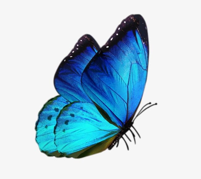 Beautiful blue butterfly clipart graphic library Blue Butterfly PNG, Clipart, Antiquity, Beautiful, Blue, Blue ... graphic library