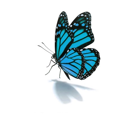Beautiful blue butterfly clipart clip Beautiful blue butterfly isolated on white background: Royalty-free ... clip
