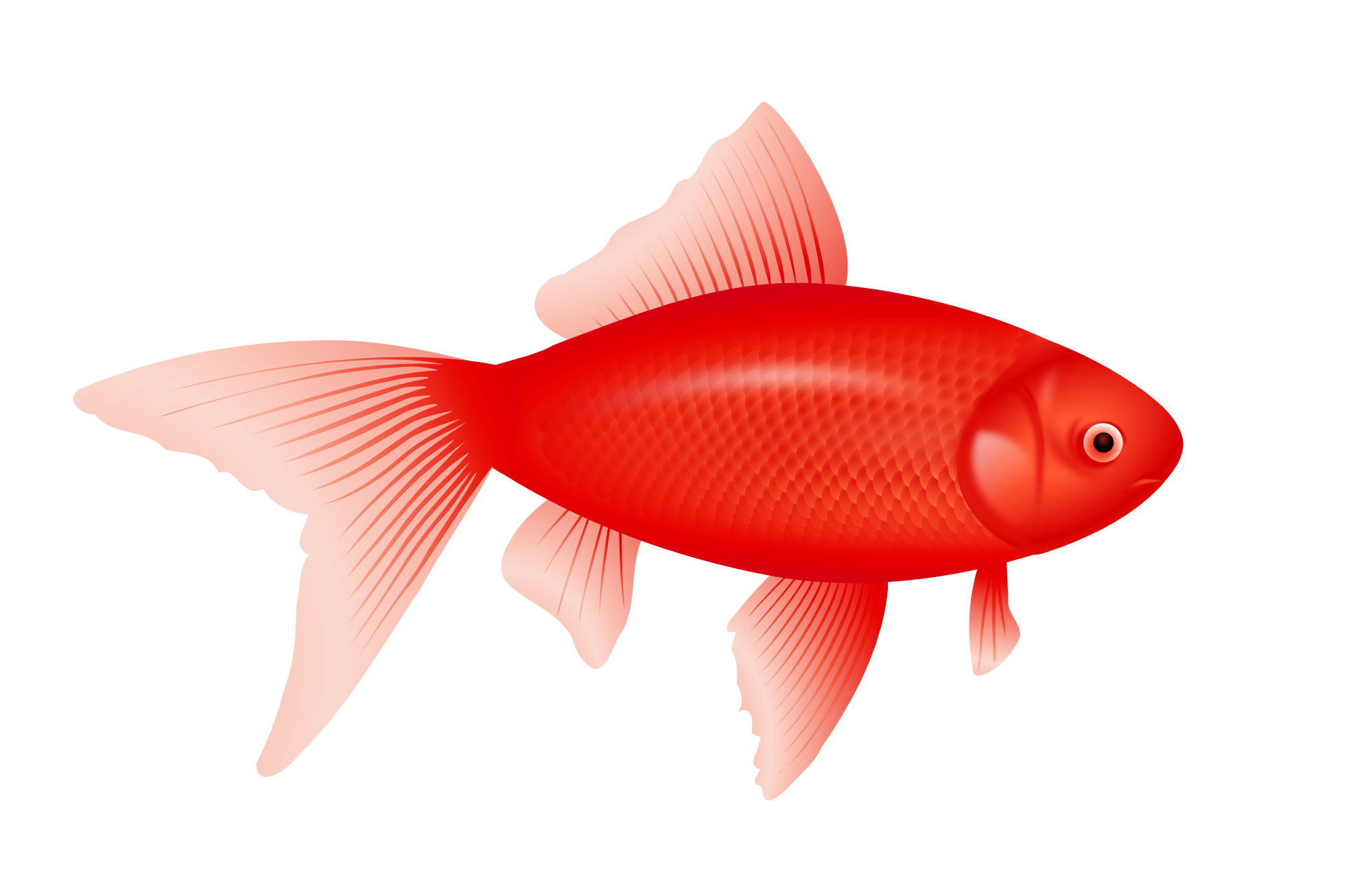 Fish clipart no background png black and white stock Fish Six | Isolated Stock Photo by noBACKS.com png black and white stock