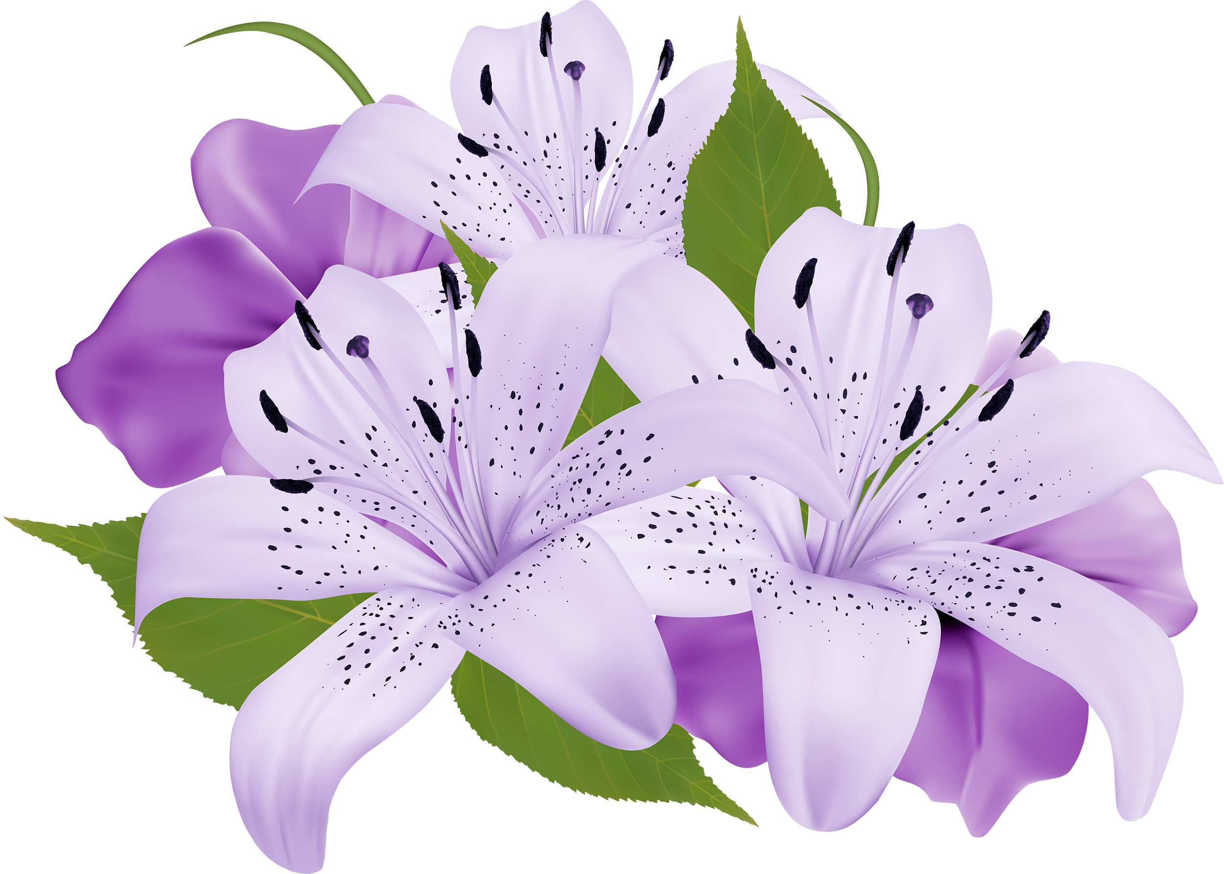 Tropical flower clipart free clip transparent library Purple Decorative Flowers PNG Clipart | Ogród | Pinterest | Flowers ... clip transparent library