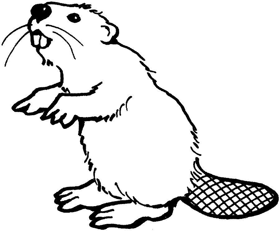 Beaver black and white clipart black and white beaver drawings | coloring home animals beaver free coloring beaver ... black and white