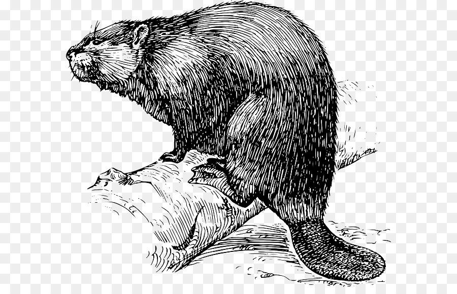 Beaver black and white clipart image free stock Beaver Cartoon clipart - Drawing, Wildlife, Illustration ... image free stock