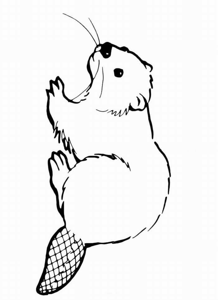 Beaver mother clipart to color image transparent stock Раскраска Бобер | Beaver | Beaver drawing, Beaver pictures, Beaver ... image transparent stock