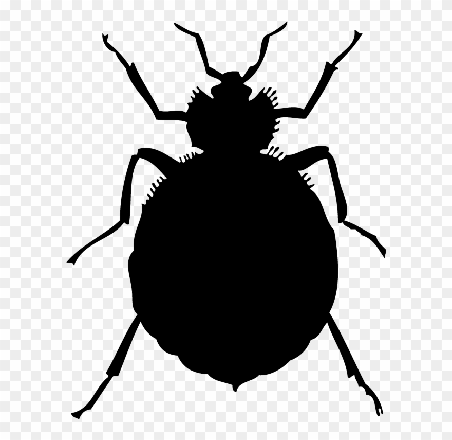 Bedbugs clipart picture library Bed Bugs Clipart - Png Download (#1047890) - PinClipart picture library