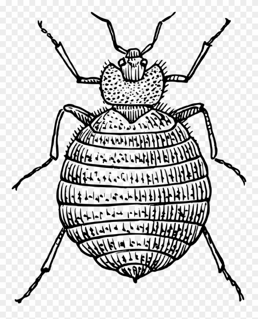 Bedbugs clipart clip art Drawn Bugs Bed Bug - Bed Bug Clipart - Png Download (#3656498 ... clip art