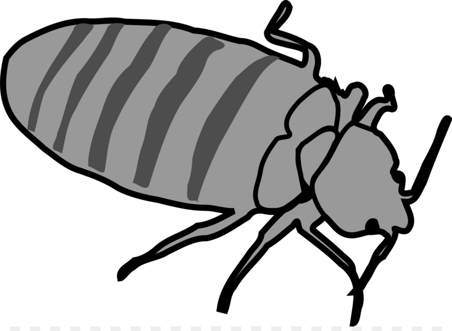 Bedbugs clipart picture royalty free download Bed Bug Fly png download - 1600*1157 - Free Transparent Bed Bug png ... picture royalty free download